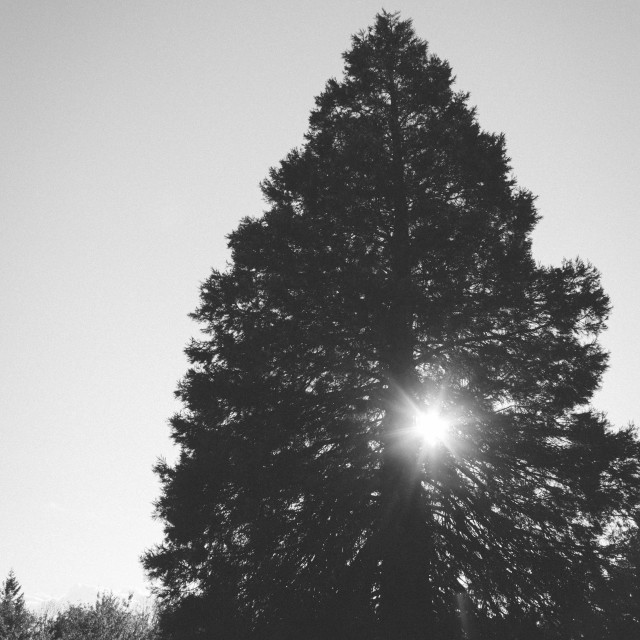 """Tree light"" stock image"