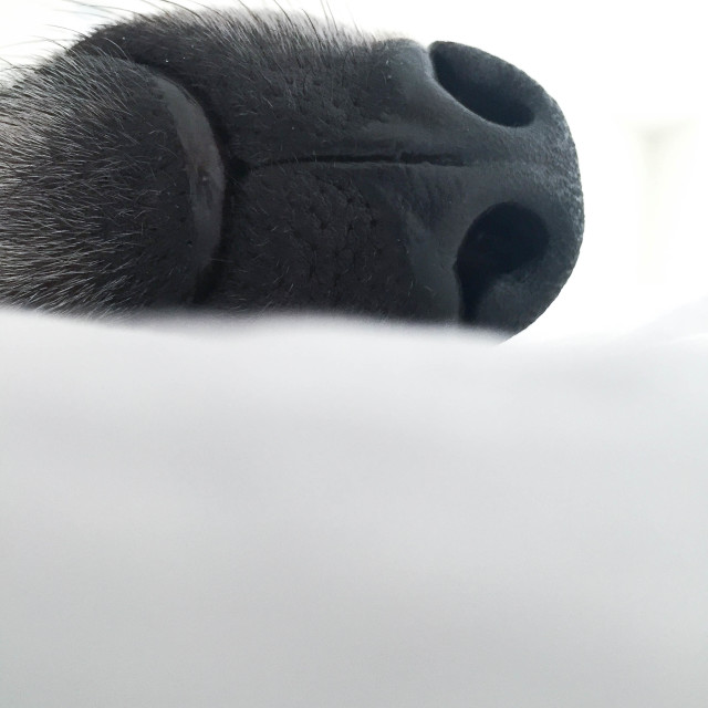 """Snout"" stock image"