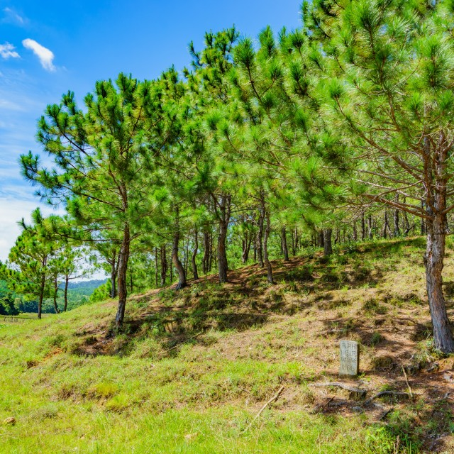 """Forest cover in Ta Nang"" stock image"