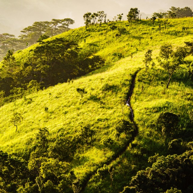 """""""Landscape of forest, hill, valley in sunlight"""" stock image"""