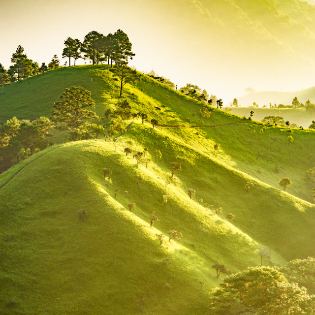 """""""Landscape of hill, forest, valley in sunlight"""" stock image"""