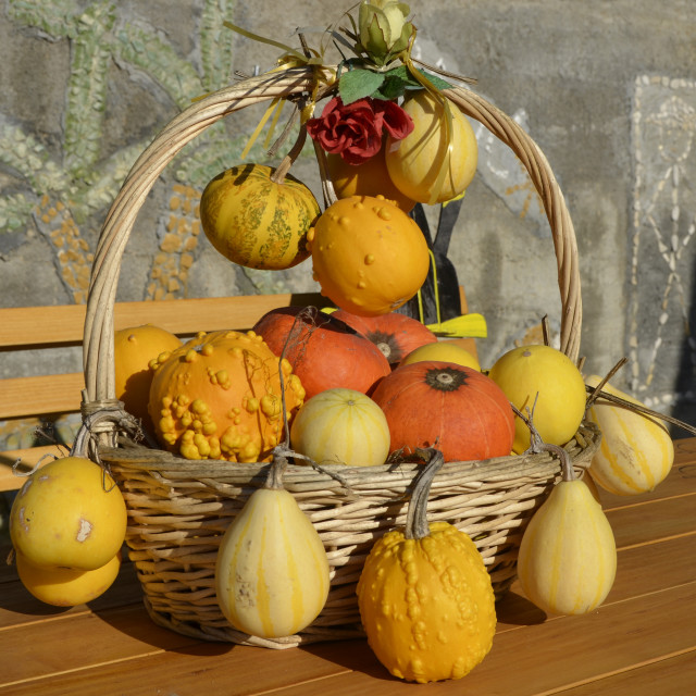 """autumn squash"" stock image"