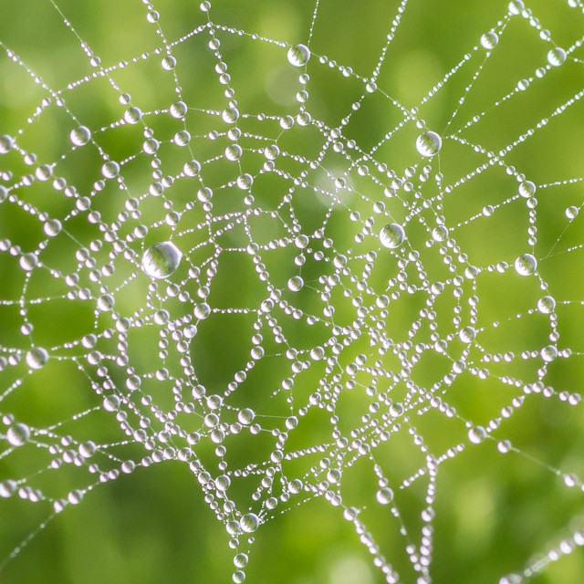 """Wet Weaver Web"" stock image"
