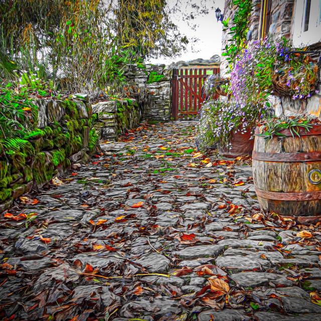 """Autumnal garden"" stock image"