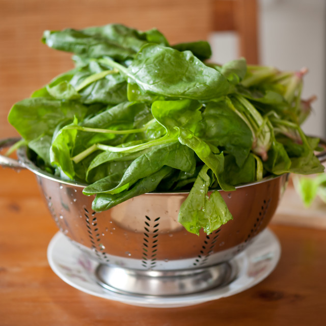 """""""Colander full of spinach leaves"""" stock image"""