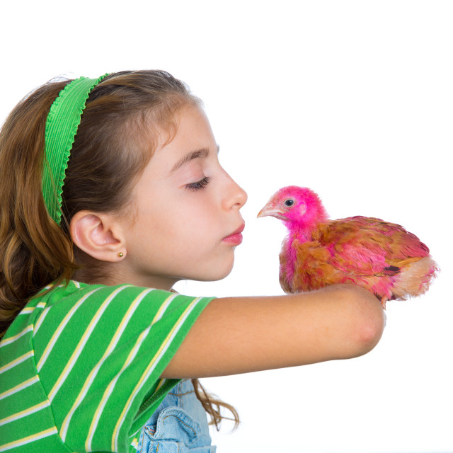 """breeder hens kid girl rancher farmer kissing a chicken chick"" stock image"