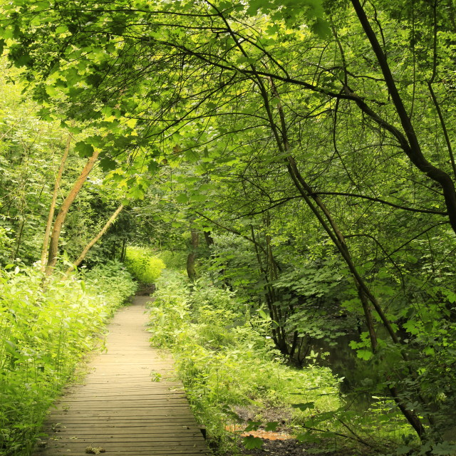 """Woodland Path"" stock image"