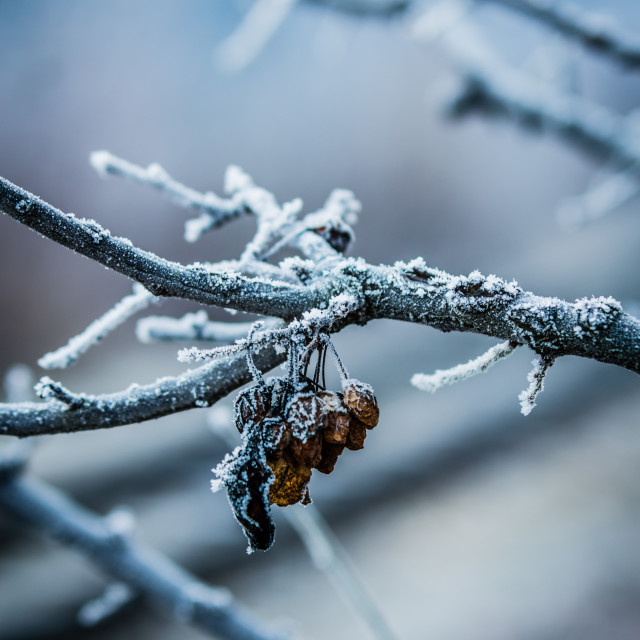 """Frost"" stock image"