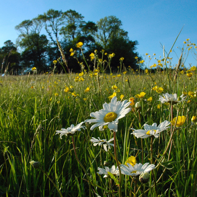 """""""Wildflowers on a Hill top, Bath"""" stock image"""