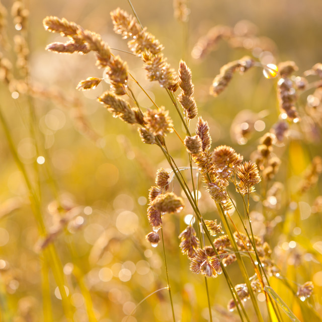 """""""Grass meadow after the rain"""" stock image"""