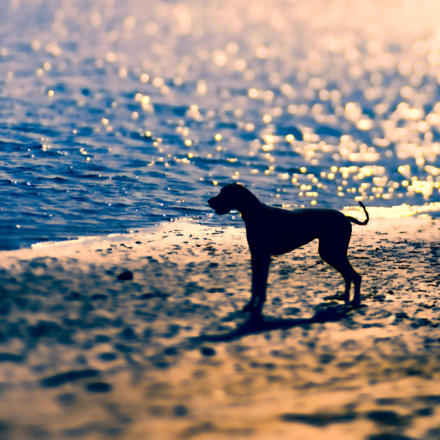 """Silhouette of a Dog"" stock image"