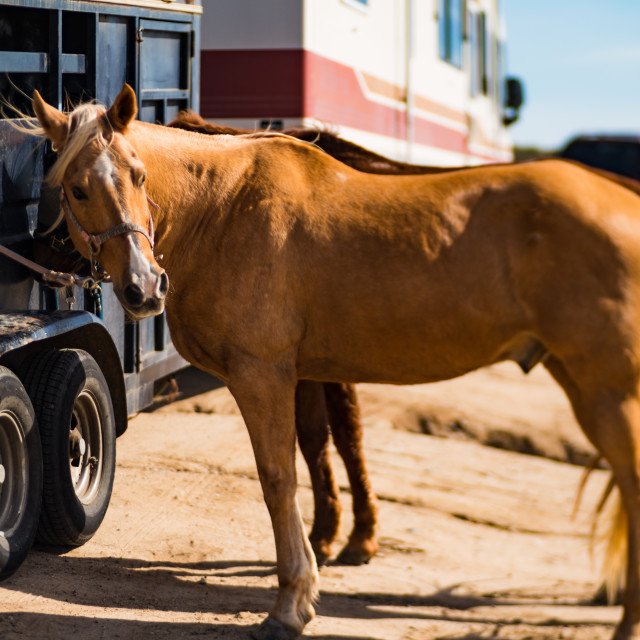 """Horses with Trailer"" stock image"
