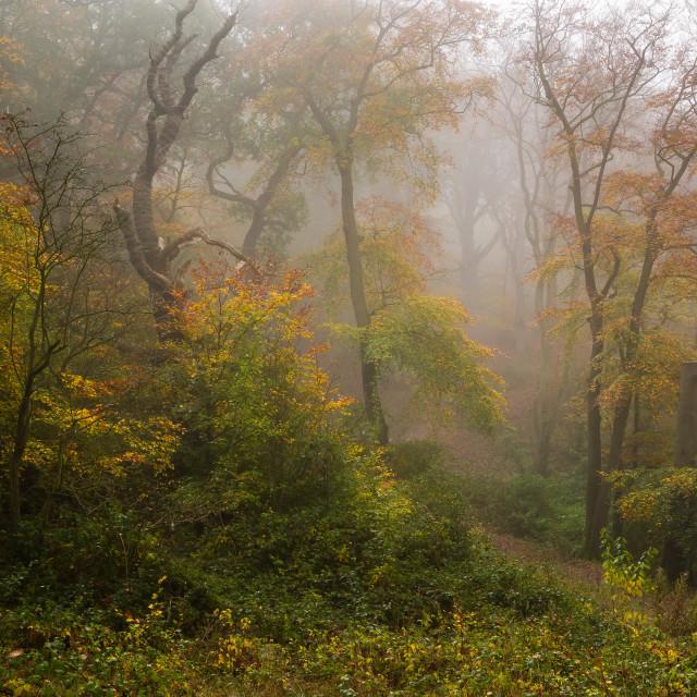 """Autumn Fog"" stock image"