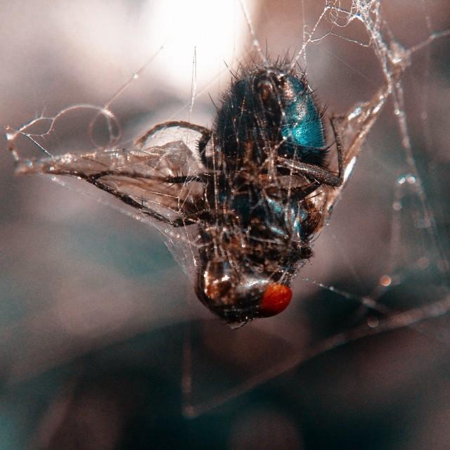 """""""Spiders prey"""" stock image"""