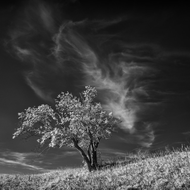 """Infrared landscape"" stock image"