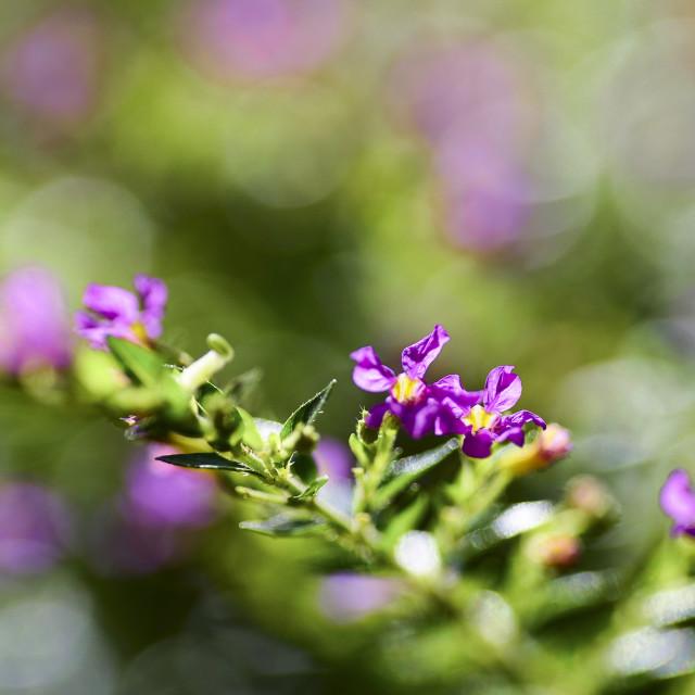 """""""Beautiful purple"""" stock image"""