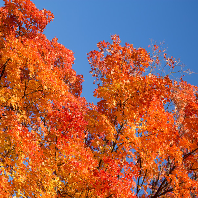 """Fall Glory"" stock image"