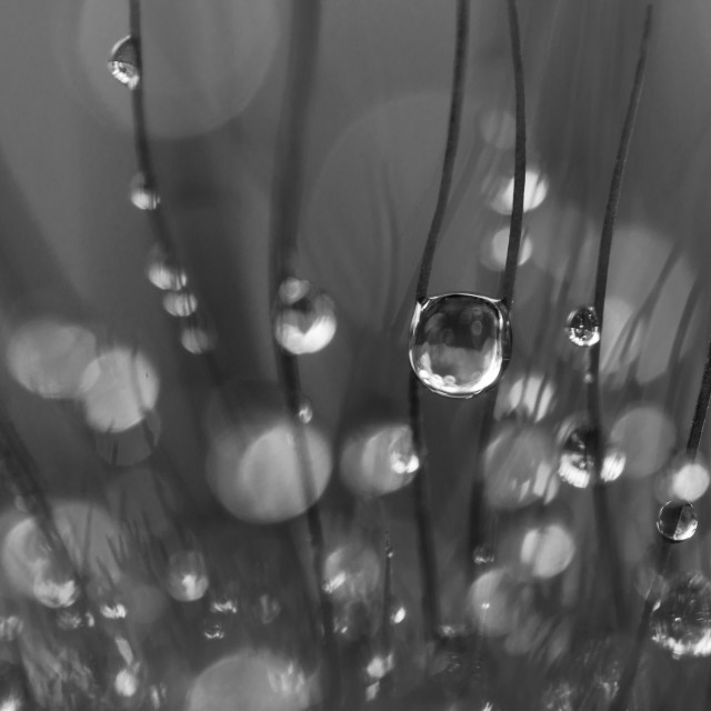 """Droplets"" stock image"