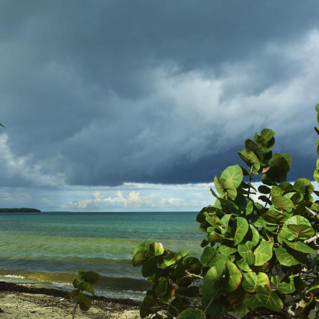 """Tropical beach and sky"" stock image"