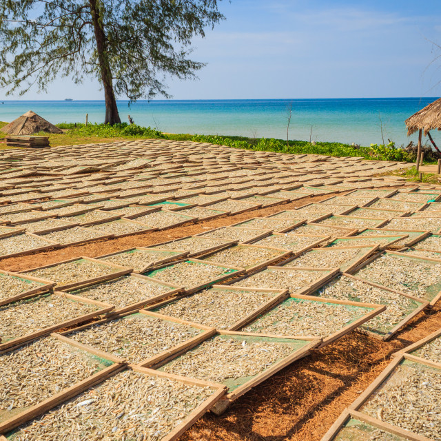 """""""Drying fishes under sunlight"""" stock image"""