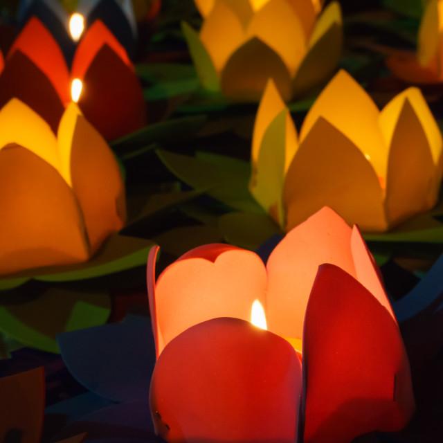 """""""Lotus lanterns"""" stock image"""