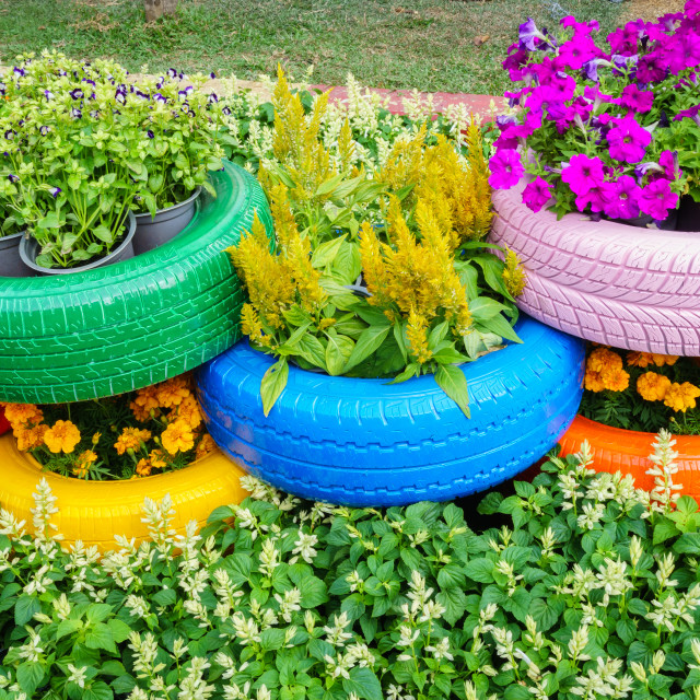 """""""Colorful flowers and tire pots"""" stock image"""