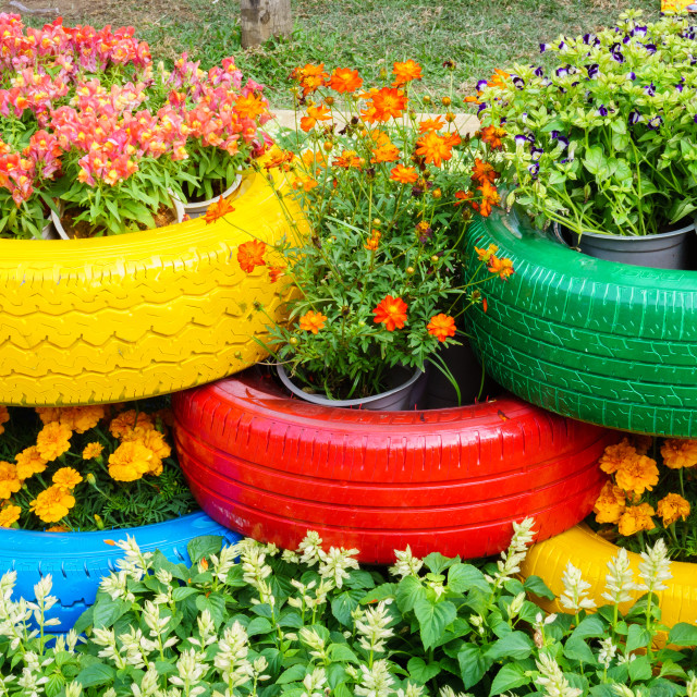 """""""The colorful flowers and tire pots"""" stock image"""