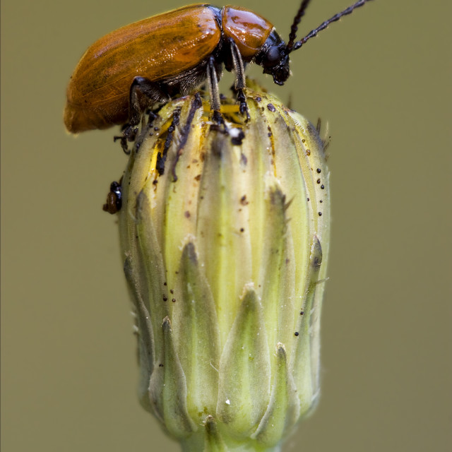 """""""the side of wild coccinellidae cercopidae"""" stock image"""