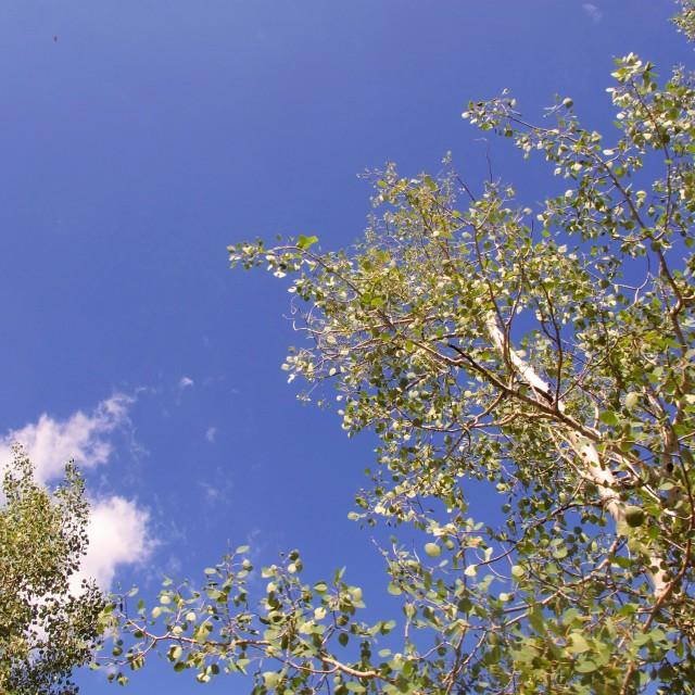 """Blue Sky in Colorado"" stock image"