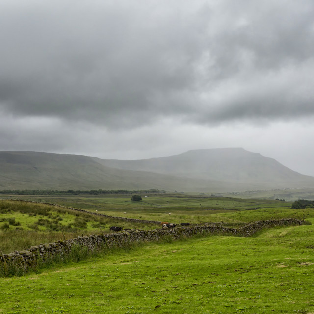 """A rainy day in the Dales"" stock image"