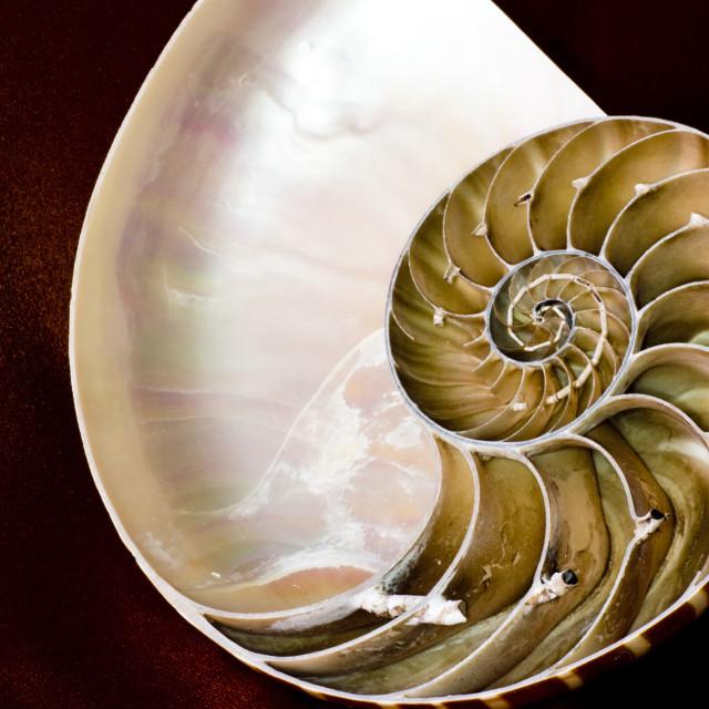 """Nautilus shell logarithmic spiral"" stock image"