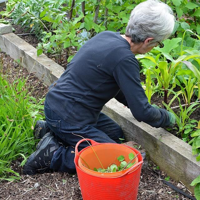 """""""gardening lady"""" stock image"""