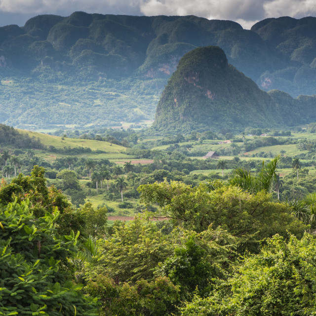 """""""Panoramic view over landscape with mogotes in Cuba"""" stock image"""