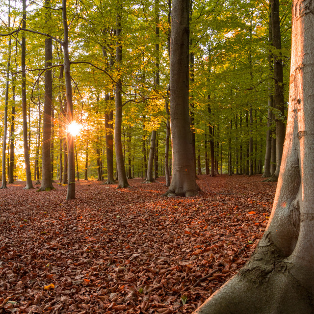 """Sunset in the woods"" stock image"