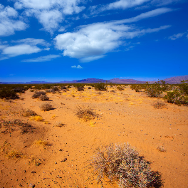 """Mohave desert in California Yucca Valley"" stock image"