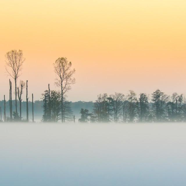 """""""Misty Landscape Sunset"""" stock image"""