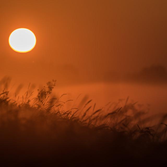 """Misty Sun Landscape"" stock image"