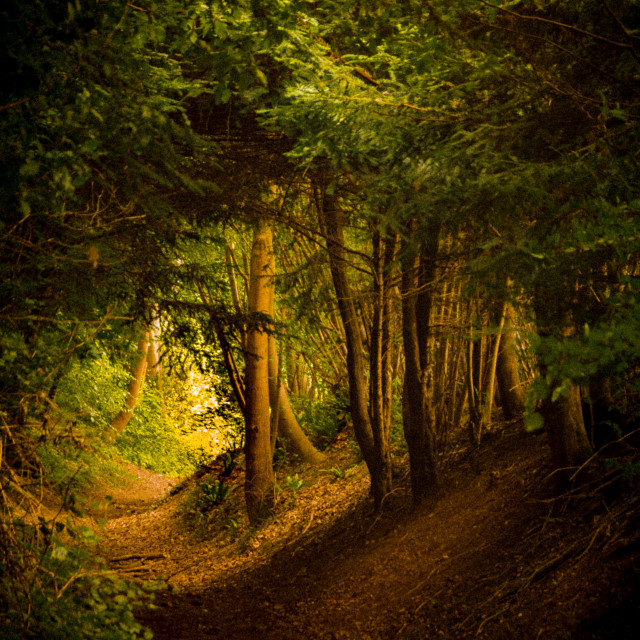 """""""Walk in the Woods"""" stock image"""