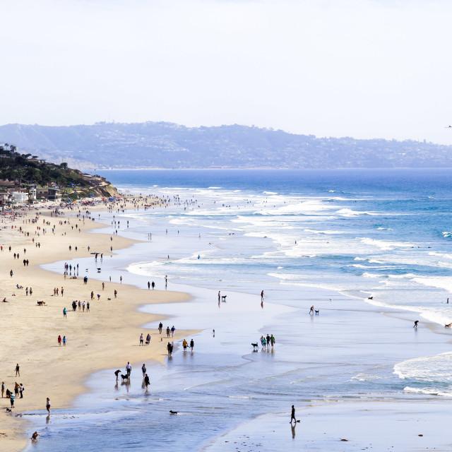 """Dog Beach"" stock image"