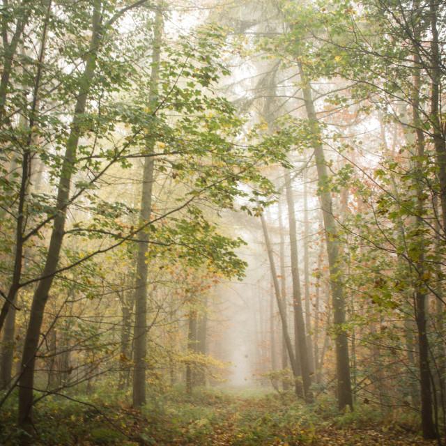 """""""Nottingham Mist"""" stock image"""