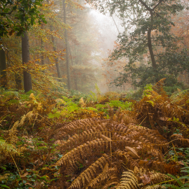 """""""Red Fern"""" stock image"""