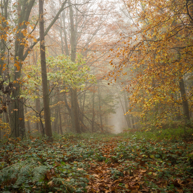 """Path into Mist"" stock image"