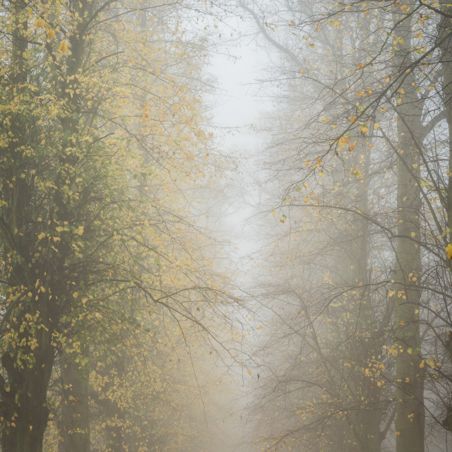 """""""Mist in the avenue"""" stock image"""