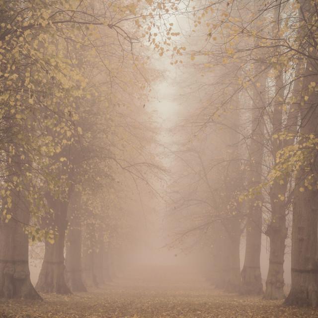 """Foggy Avenue"" stock image"