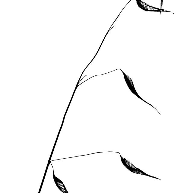 """Grass Silhouette No 3"" stock image"