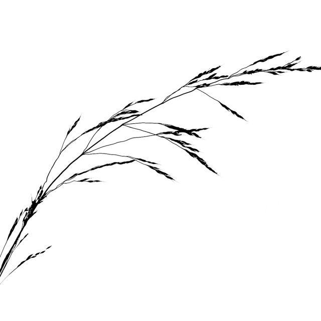 """Grass silhouette No 4"" stock image"