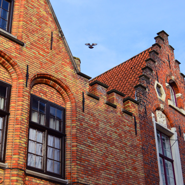 """""""Bruges brick houses & dove"""" stock image"""