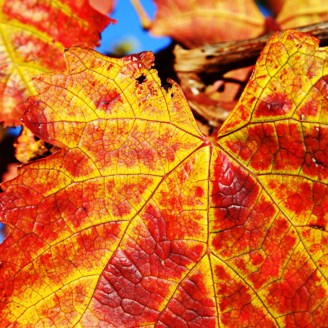 """Autumn Leave"" stock image"