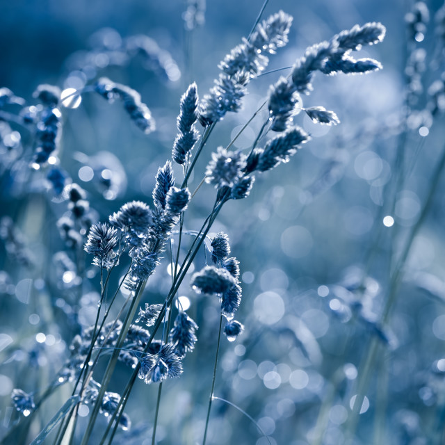 """Blue grass shining in bokeh"" stock image"