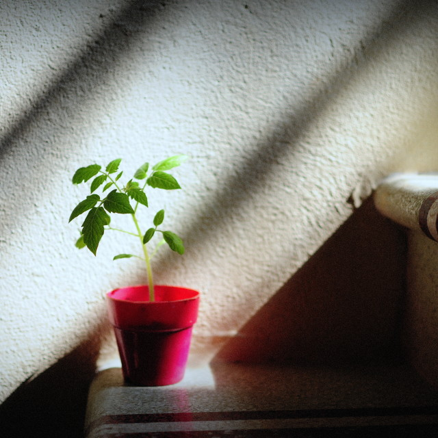 """A little tree in my house"" stock image"
